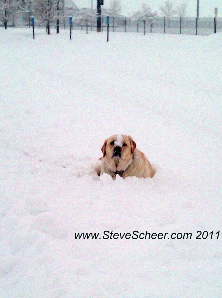 Highlands Ranch snow dog