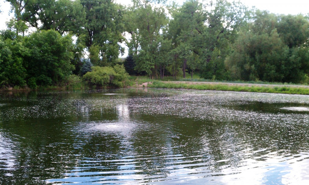 Fishing Pond at Fly 'N B Park Highlands Ranch, CO