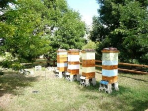 hudson gardens bee hives